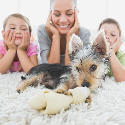 Dog with family | Pilot Floor Covering