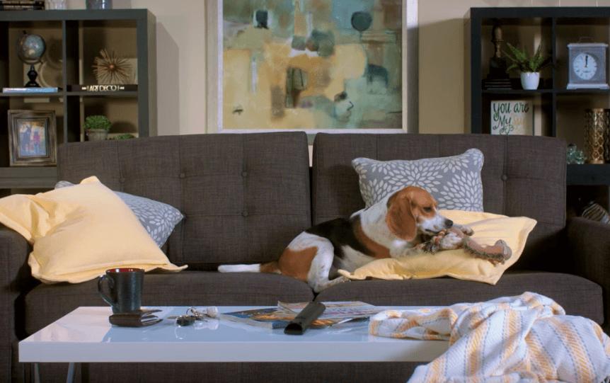 Dog on sofa | Pilot Floor Covering